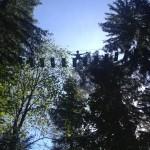 Hoch oben im Kletterwald